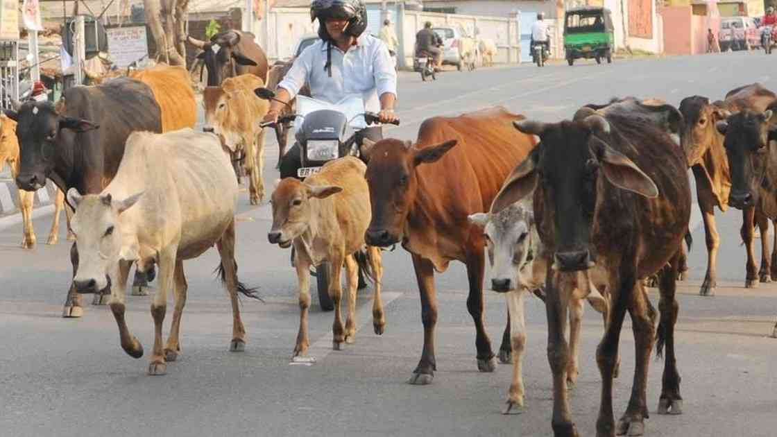 cows starve in MP cow-shelter - Satya Hindi